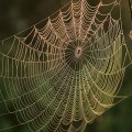 Spider_web_with_water_dews_on_it_in_sunrise
